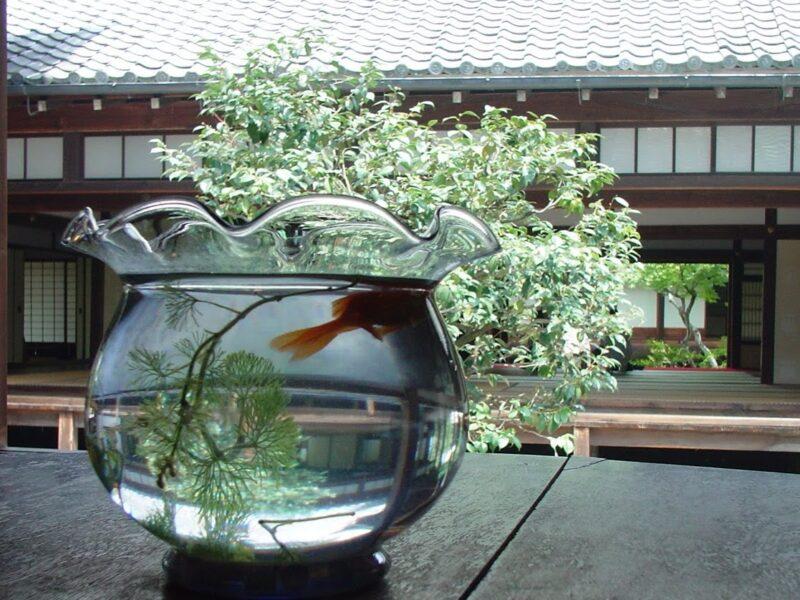 2007金魚鉢