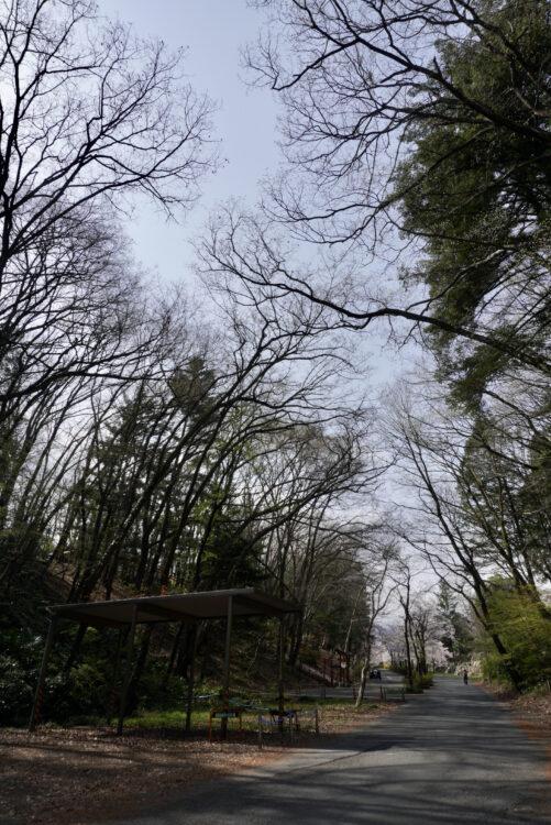 羊山公園山道