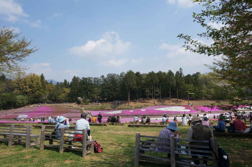 芝桜ベンチ