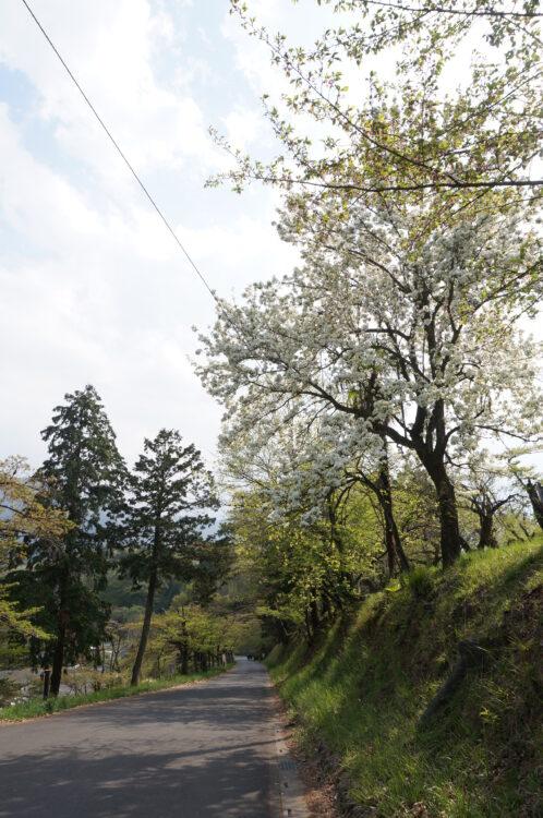 見晴らしの丘道