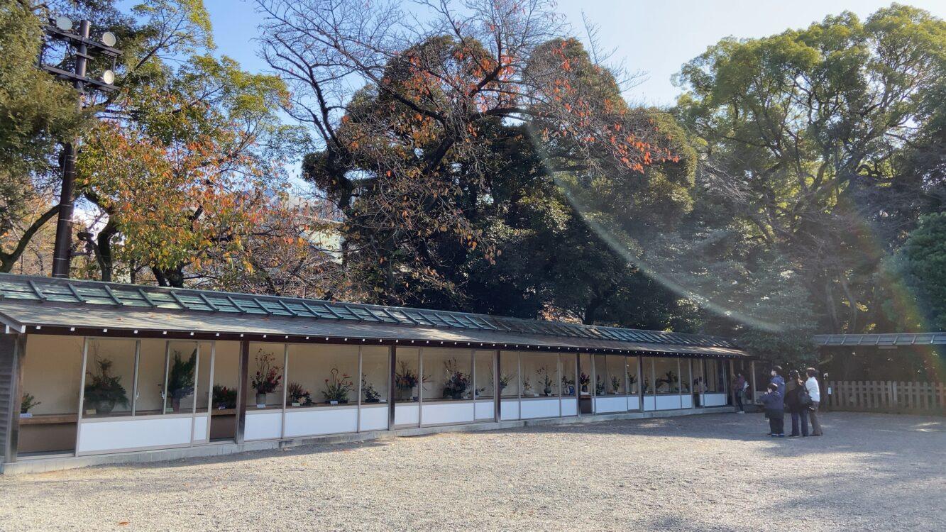 靖国神社菊展