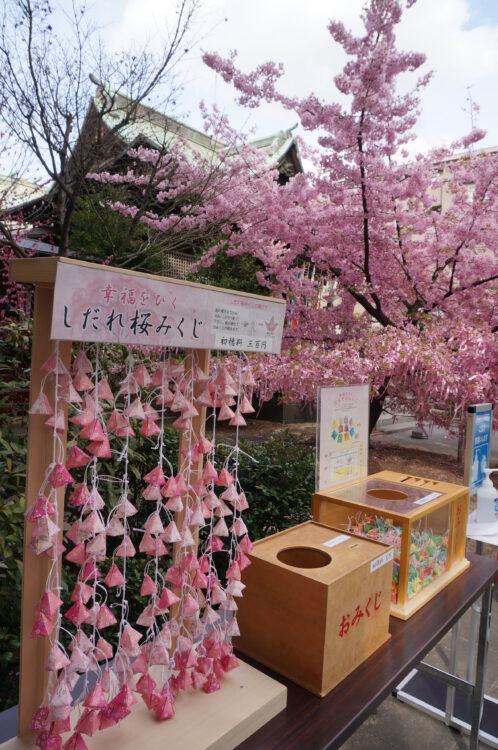 桜神宮おみくじ