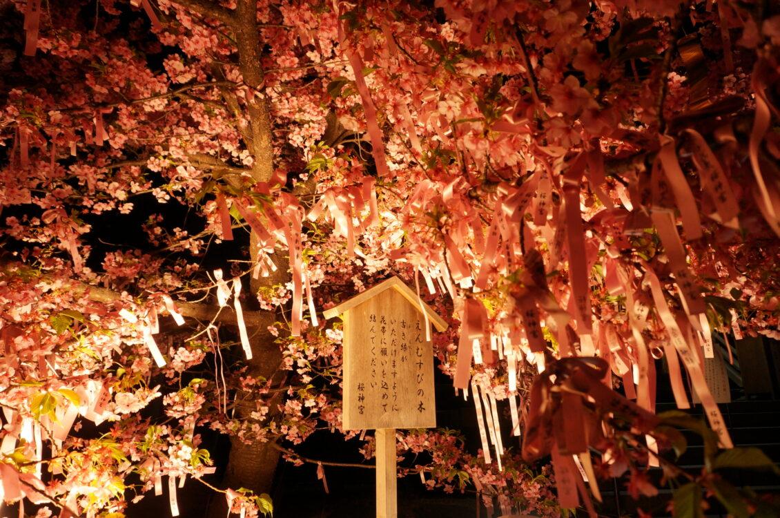 桜神宮夜6