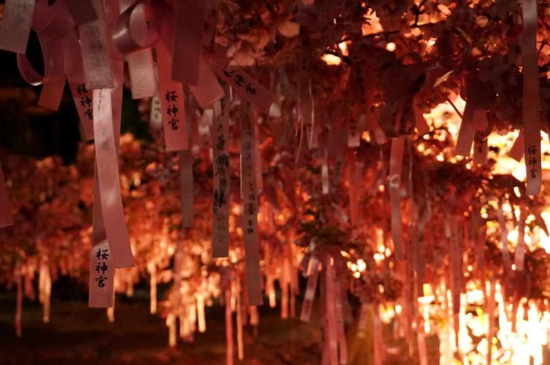 桜神宮夜8