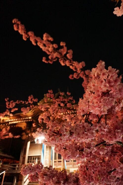 桜神宮夜9