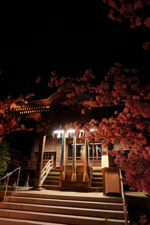 桜神宮夜4