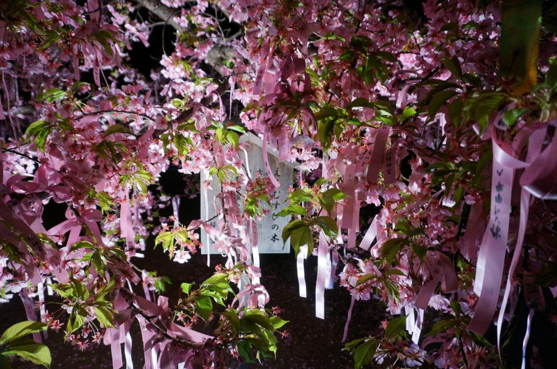 桜神宮夜5