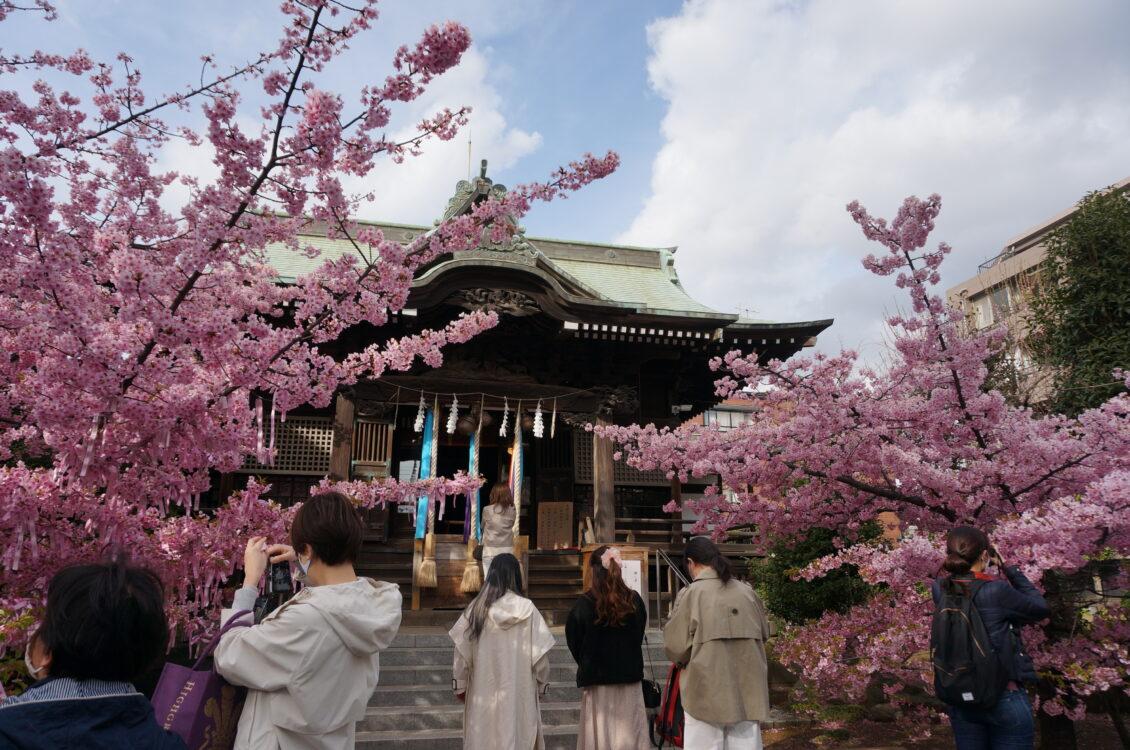 桜神宮22