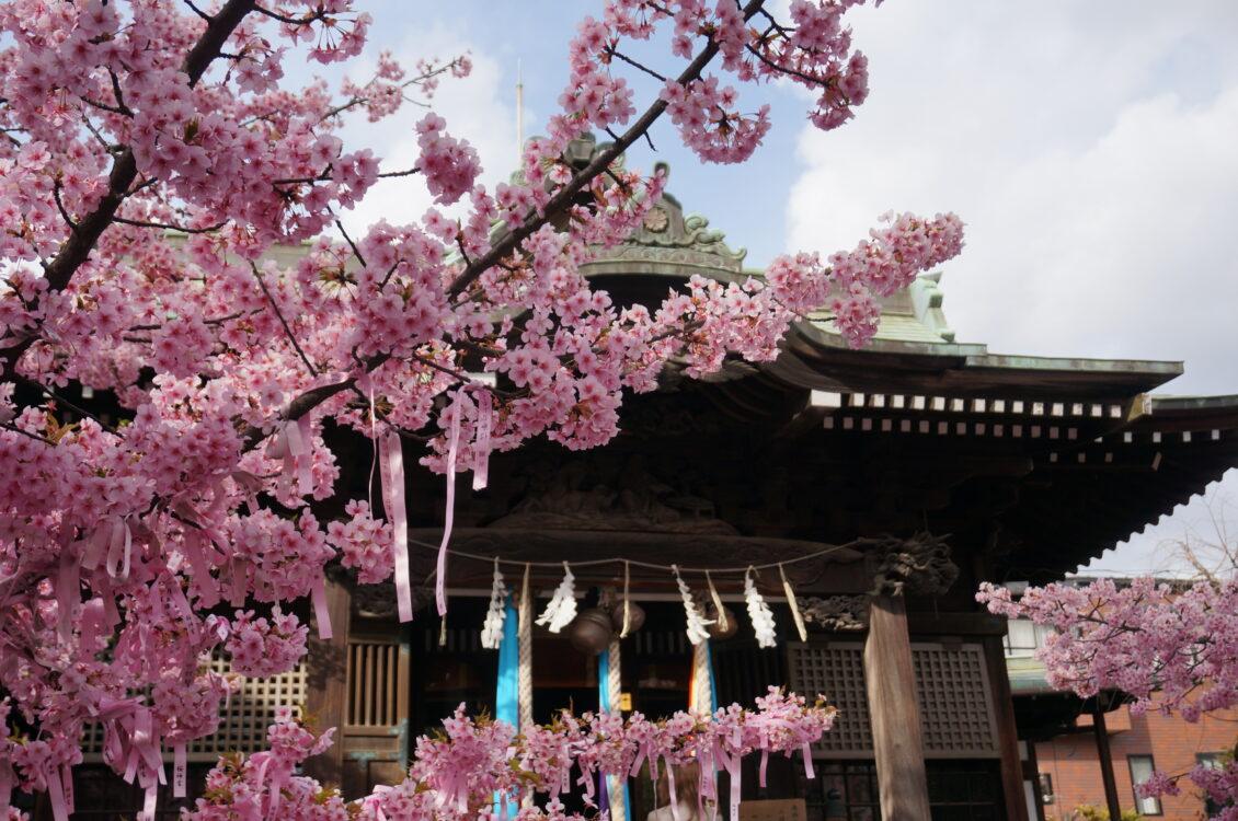 桜神宮23