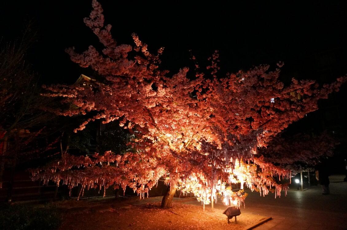 桜神宮夜10