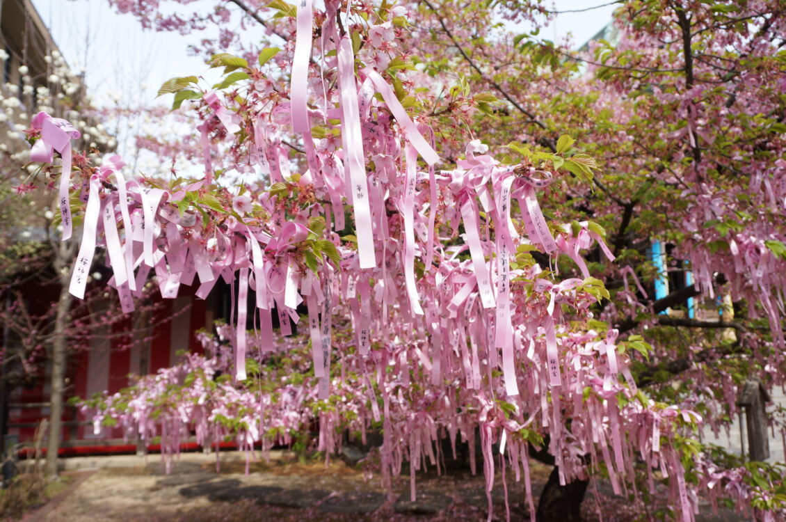 桜神宮9日2
